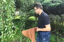 Po deštích v minulých dnech může přijít komáří kalamita. Lokálně. Libor Mazánek z Krajské hygienické stanice Olomouckého kraje odchytil ve vegetaci uprostřed Střeně osm komárů během deseti sekund. Další se budou líhnout.