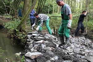 Oprava břehu řeky Moravy u Nákla poničeném bobry