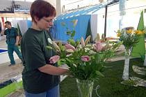 Přípravy na tradiční olomouckou výstavu květin.