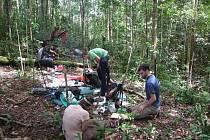 Biologové z Univerzity Palackého objevili na Borneu už desátý druh rostliny