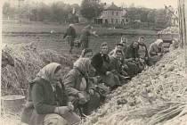 NA POLI. Ženy přebírají zakrechtované brambory a vybírají sadbu na pole. Pracovnice jsou z rostlinné skupiny Zemědělského družstva Mladějovice. Snímek pochází z roku 1962.