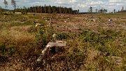 Apokalypsa. Jinak nelze popsat stav smrkových porostů kolem pramene Odry. Vyhledávaná turistická trasa připomíná bojiště, kde člověk v boji s dřevokaznými škůdci a počasím prohrává na celé čáře.