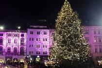 Vánoční strom na olomouckém Horním náměstí