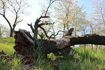 Jaro v přírodní rezervaci Malý Kosíř.
