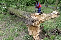 Vyvrácený strom ve Smetanových sadech.