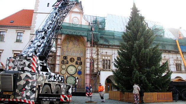V Olomouci rozsvítí vánoční strom