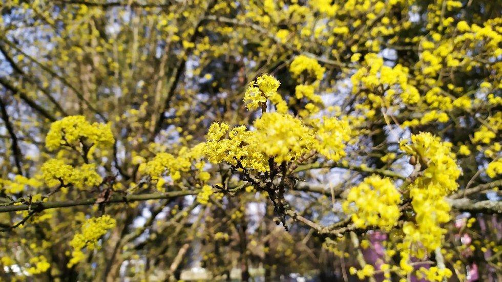 Jaro v Mohelnici, 5.4.2020