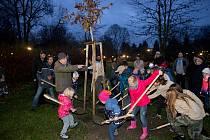 Skauti zasadili strom ke stému výročí organizace - na dalších 100  let.