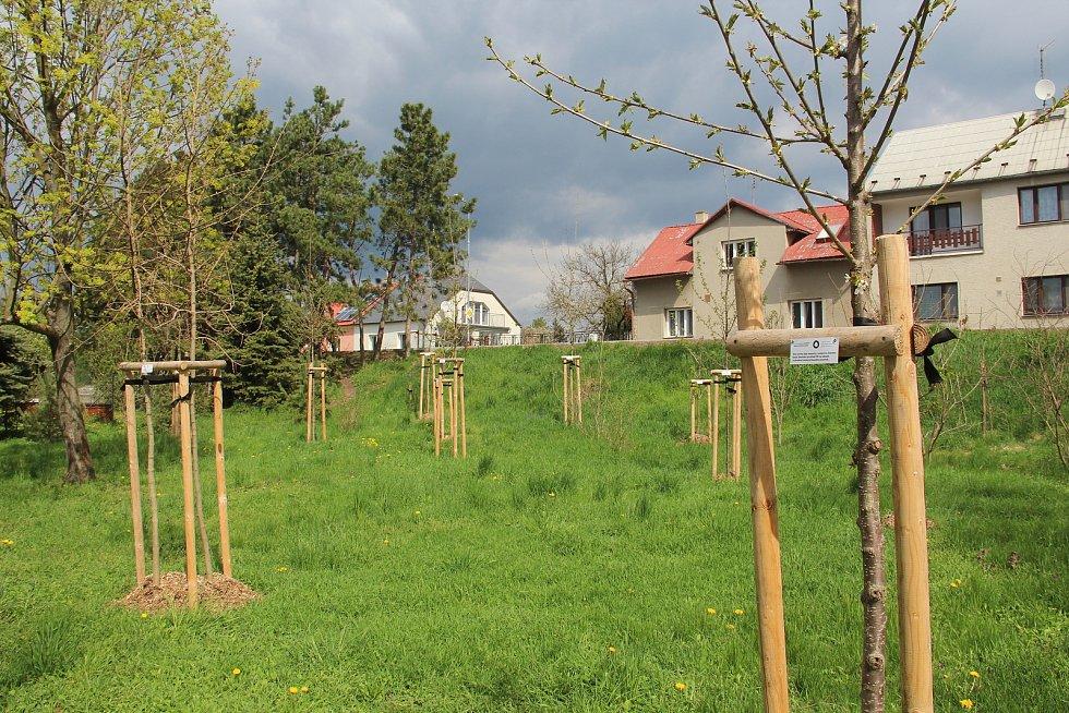 Nové výsadby u dětského hřiště v Ústíně