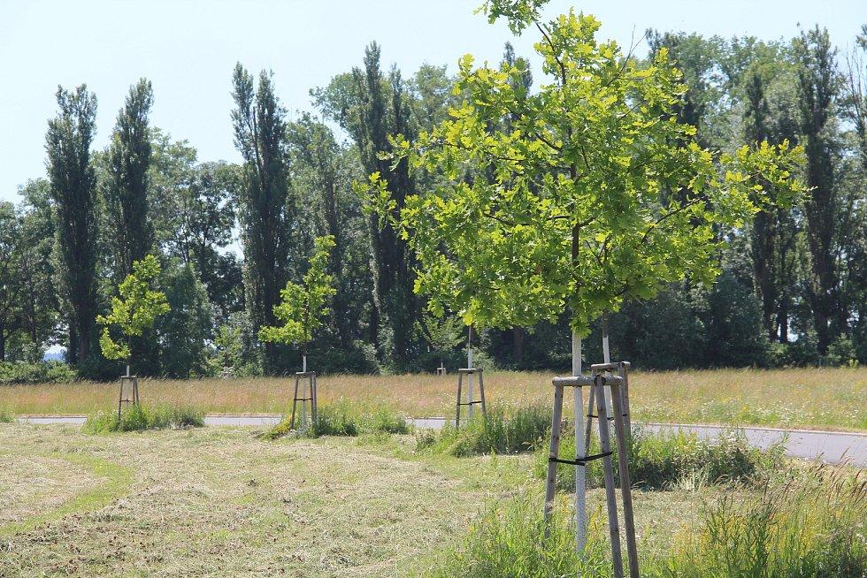 Nová cyklostezka k rybníkům vznikne ještě letos. Do budoucna se počítá také s dětských hřištěm, venkovní posilovnou a fitstezkou s in-line okruhem.
