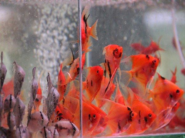 Akvarijní a terarijní burza Aquatera na Výstavišti Flora vOlomouci
