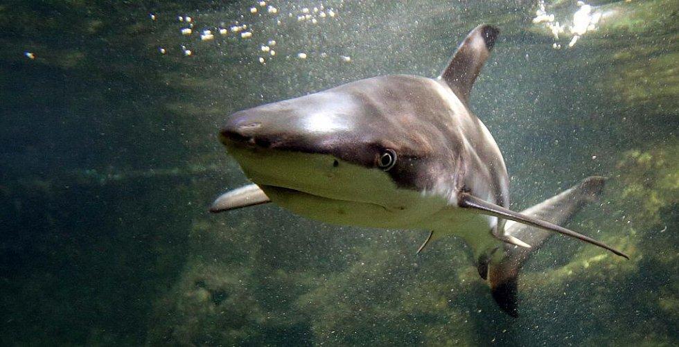 Krmení žraloků v olomoucké zoo