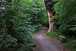 Alej v Tovačově tvoří věkovité duby letní, které dosahují stáří pěti set let