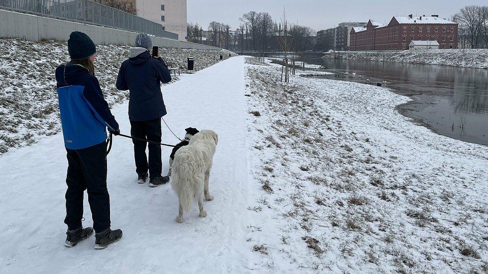 Řeka Morava v Olomouci u vysokoškolských kolejí, 9. února 2021
