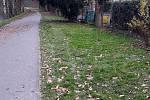 Cyklostezka podél Mlýnského potoka spojující Hejčín a Poděbrady. Fotka trávníku u hospody U Travise je z úterního poledne - po nedělním fotbale se na něm otáčela auta jedoucí