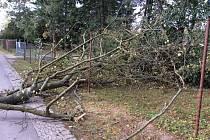 Strom na stezce propojující ulici 17. listopadu a Bezručovy sady v Olomouci, 1. 10. 2019
