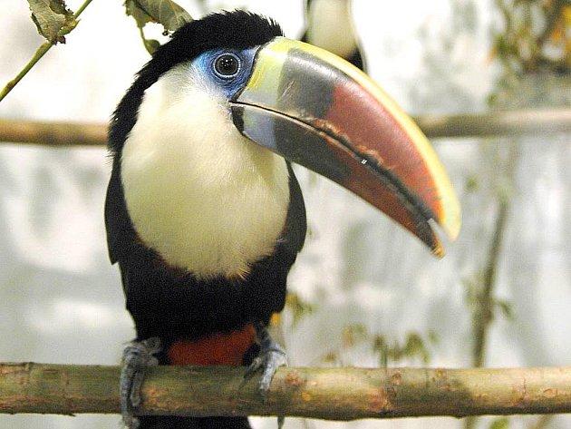 Výstava cizokrajného ptactva Exota na olomouckém výstavišti
