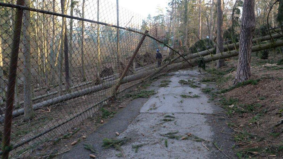 Následky vichru z 10. na 11. 3. 2019 v olomoucké zoo. Výběh kozorožců sibiřských