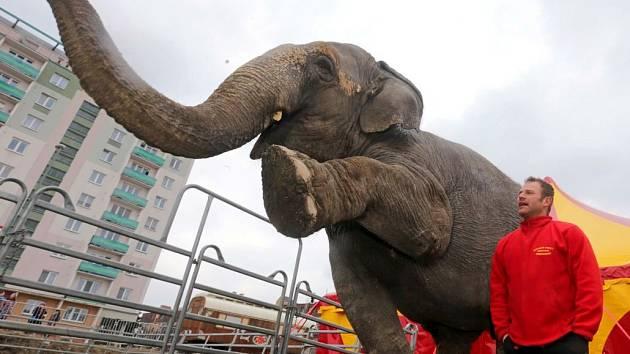 Národní cirkus Originál Berousek. Ilustrační foto