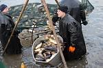 Vánoční ryba míří ze sádek do kádí prodejců.