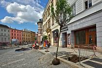 Sázení stromů na rekonstruované Dolní náměstí v Olomouci