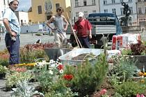 Zahradníci se snaží vybírat květiny, které jsou běžně dostupné, aby tak zabránili krádežím.