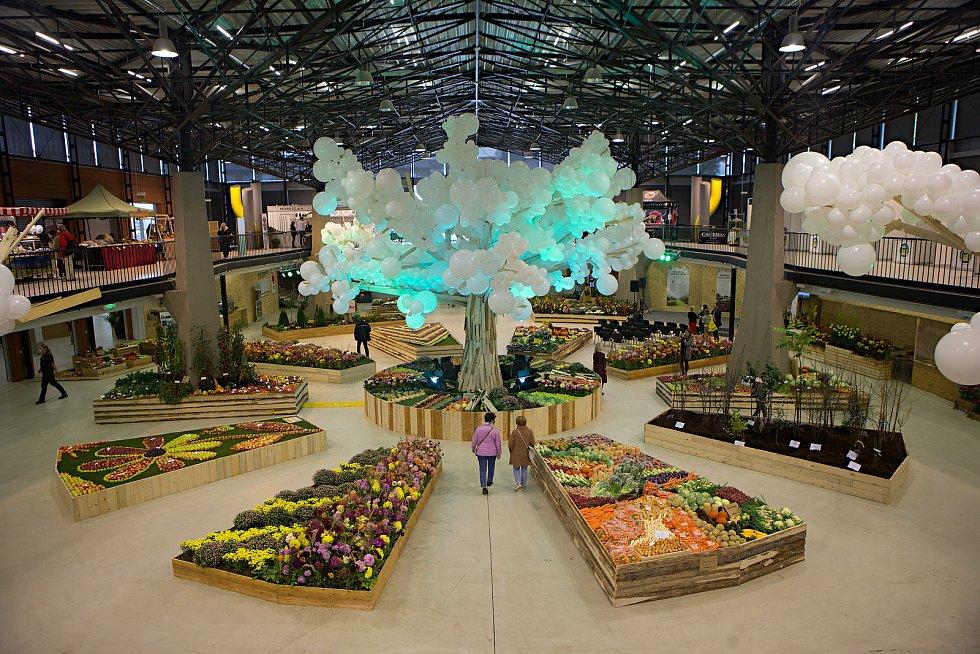 Podzimní etapa výstavy Flora Olomouc. 1. října 2020