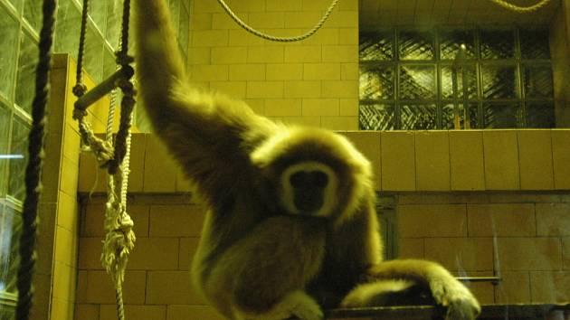 Večerní prohlídka olomoucké zoo.