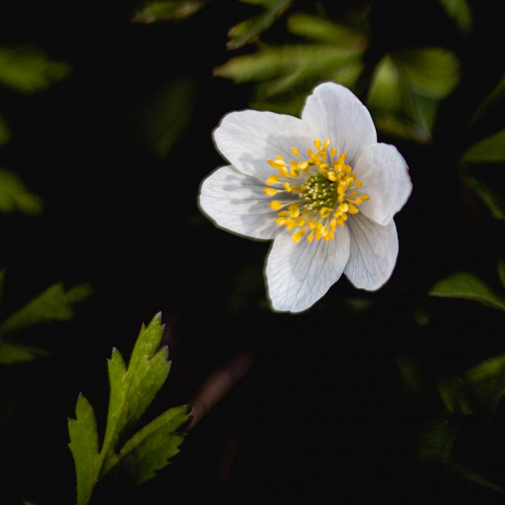 Jaro u rybníka v Polici