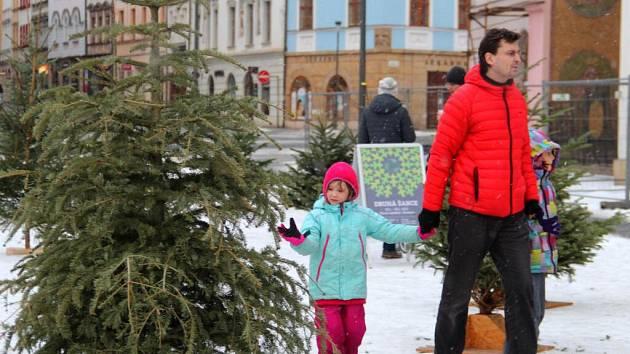 Druhá šance pro vánoční stromky na Horním náměstí v Olomouci