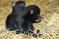 U baribalů mají dvojčata - kluka a holku. Narodila se 4.ledna