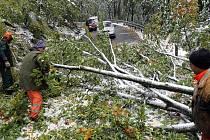 Padlé stromy komplikovaly dopravu