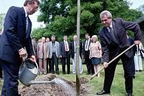 Miloš Zeman jako premiér zasadil v roce 1999 v olomouckých Smetanových sadech. Asistuje mu tehdejší primátor Martin Tesařík