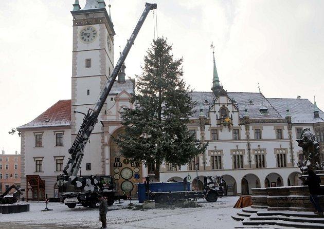 Kácení vánočního stromu v Olomouci - 8. ledna 2016