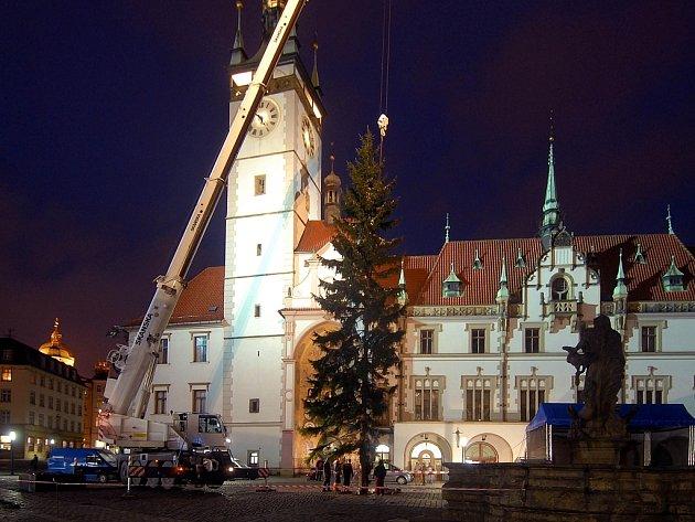Vánoční strom byl vztyčen.
