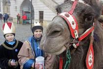 Tři králové s velbloudem koledují na Horním náměstí v Olomouci