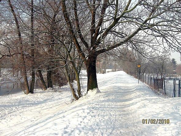 U pěší lávky, Klášterní Hradisko. Únor 2012. Foto: Vítězslav Jahoda