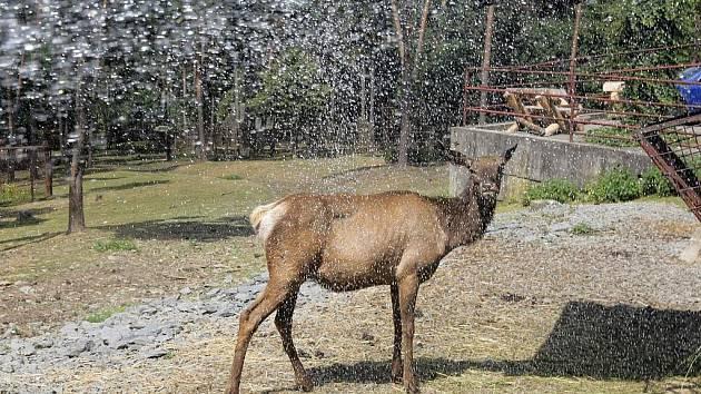 Sprchování zvířat v olomoucké zoo na Svatém Kopečku.