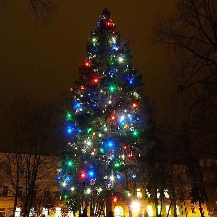 č.5 Olomouc-Řepčín, park ve Svatoplukově ulici, smrk, 20 metrů