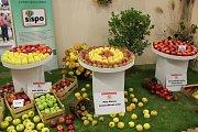 Na podzimní Floře předvedli úrodu zahrádkáři a sadaři z celé republiky