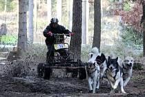 Mikulášské závody psích spřežení se konají o tomto víkendu v Radíkově, městské části Olomouce. Do areálu tamní Chaty pod věží se sjeli závodníci z Česka i zahraničí.