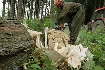 Dřevorubci odstraňují následky vichru