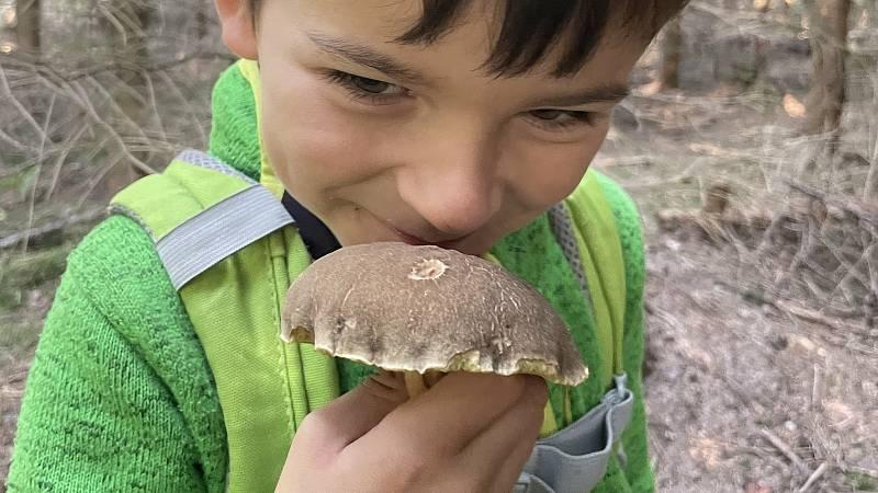 Exempláře hub z lesů nad Ludéřovem, místní část Drahanovic, 5. září 2021