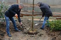 Zpěvák Janek Ledecký podpořil obnovu zoo, kterou v březnu poničila vichřice. Kytaru vyměnil za rýč a vysadil jilm. Sázel také Josef Podstata, ředitel Českého rozhlasu Olomouc