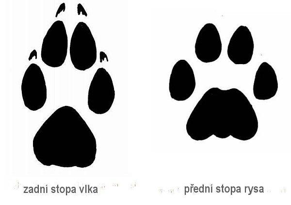 Stopy vlka a rysa