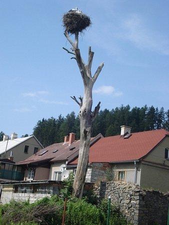 Existenci čapího hnízda vDomašově ohrožuje shnilý strom