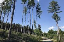 Kůrovcová kalamita na Bouzovsku.  (17.května 2020)