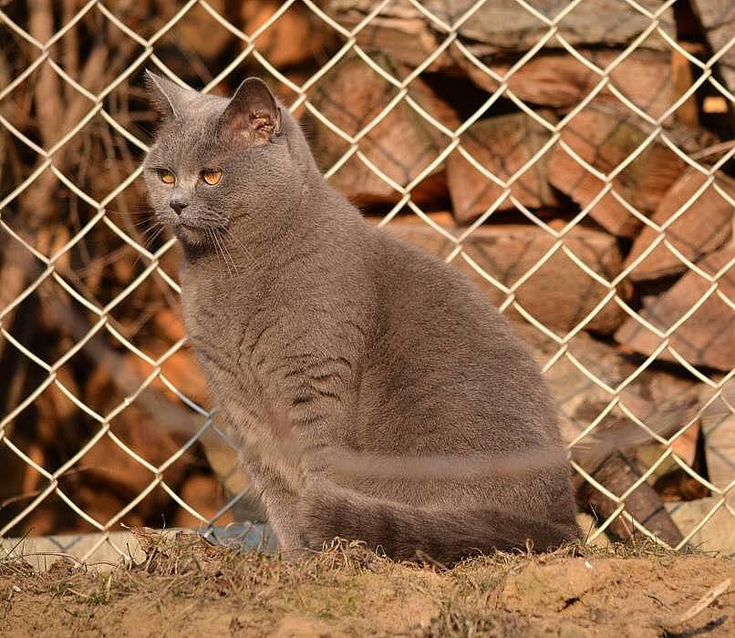 Kočka ve Velkém Týnci. 12.2.2012. Foto: Jindřich Pospíšil