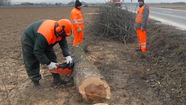 Silničáři odstraňují staré stromy od cest.