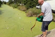 Aplikace zeolitu se speciálními bakteriemi k vyčištění kontaminované vody v říčce Blatě
